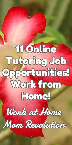 11 Online Tutoring Job Opportunities! Work from Home! / Work at Home Mom Revolution