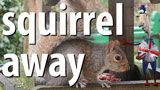 Squirrel Away