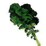 Blood Type Diet Food Value: kale