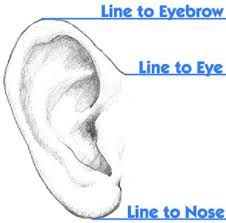 Image result for ear sculpting tips