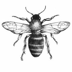 Black and Gray Bee Tattoo Design - 99 Breathtaking Black and Grey Tattoo Design. - Black and Gray Bee Tattoo Design – 99 Breathtaking Black and Grey Tattoo Designs – - Trendy Tattoos, New Tattoos, Tatoos, Dotted Tattoo, Honey Bee Tattoo, Natur Tattoos, Bild Tattoos, Bee Art, Realistic Drawings
