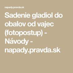 Sadenie gladiol do obalov od vajec (fotopostup) - Návody - napady.pravda.sk