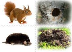 Zvířátka a jejich obydlí 2 Forest Animals, Zoo Animals, Animals For Kids, Animals And Pets, Cute Animals, Animal Activities For Kids, Infant Activities, Le Zoo, Theme Nature