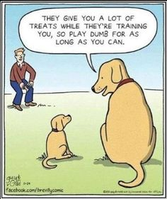 They give you a lot of treats while they're training you, so play dumb for as long as you can... ;-)  #funny #humorous #hilarious #amusing #comical #entertaining #joke #comic #lighthearted #parody #spoof #satire