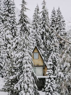 SEASONAL – WINTER – the pine forest knows that winter is coming, a few pine needles turn brown and fall to the ground, but the pine forest remains evergreen at this winter cabin.
