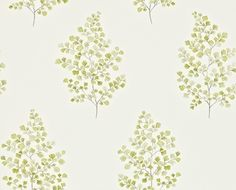 Angel Ferns (211998) - Sanderson Wallpapers - A delicate, fresh, botantical print of an Angel Fern motif - shown in the olive green on a off white background. Other colours available. Please request a sample for a true colour match. Paste-the-wall product.