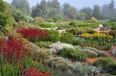 The-Australian-Garden-by-Taylor-Cullity-Lethlean-and-Paul-Thompson-15 « Landscape Architecture Works | Landezine Australian Native Garden, Australian Plants, Landscape Architecture Portfolio, Landscape Design, Landscape Architects, Contemporary Landscape, Small Gardens, Outdoor Gardens, Plant Design