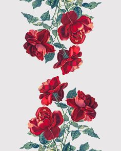 Red Roses Art Print by Heart Of Hearts Designs