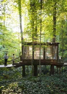 tree house with bridges
