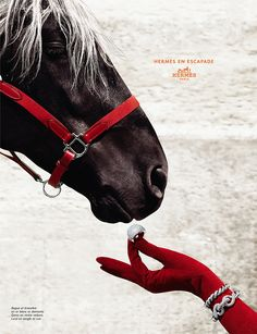 Hermes campaign.