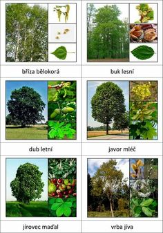 Listnaté stromy Preschool Science, Science For Kids, Science And Nature, Forest School Activities, Autumn Activities For Kids, Glenn Doman, Tree Identification, Montessori Materials, Learning Environments