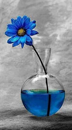 انمى .. - صفحة 36 4f87739678ffe99ff992070dea54671b--pictures-for-painting-still-life-flowers