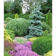 I heart conifers! I heart conifers! Amazing Gardens, Beautiful Gardens, Landscape Design, Garden Design, Evergreen Garden, Garden Shrubs, Garden Borders, Front Yard Landscaping, Landscaping Ideas