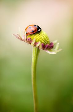 love ladybugs!