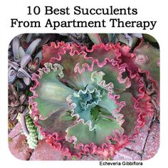 10 Best Succulents From Apartment Therapy