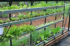 Greenhouse gardening in gutters