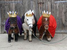 Three pony kings!
