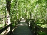 Radnor Lake Trail  #OnlyinNashville