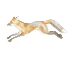 Swift Fox Limited Edition Art Print by Natalie Groves | Minted