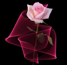 An animated gif. Make your own gifs with our Animated Gif Maker. Flowers Gif, Beautiful Rose Flowers, Pretty Roses, Happy Morning, Good Morning Good Night, Happy Day, Happy Tuesday, Glitter Graphics, Beautiful Morning