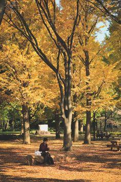 @ yoyogi park