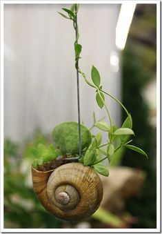 Miniature vertical garden in a snail shell