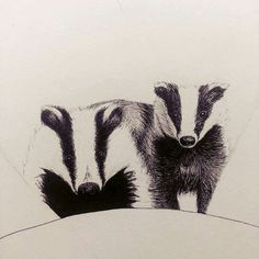 Illustration of two badgers made as an practice for a commission with two badgers, made by Ayla Paul