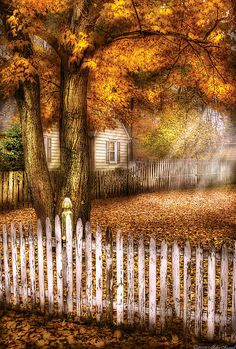 white picket fence  fine artMike Savad