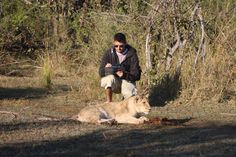 Become a volunteer on our unique hands-on lion conservation projects