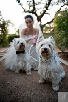 We hope that marriages will last forever, but Westie love is guaranteed to be eternal.