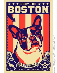 Obey the boston terrier