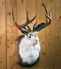 Check out the Cabela's Mounted Jackalope Buck in Art, Wall Hangings & Wall Objects from Cabela's for Taxidermy Jewelry, Taxidermy Decor, Taxidermy Display, Faux Taxidermy, Bear Mounts, Bobcat Mounts, Fish Mounts, Duck Mount, Bear Rug