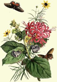 Hundreds of botanical prints of culinary herbs, medicinal plants and flowers from all over the world Botanical prints by Georg Ehret http://www.botanical-gallery.co.uk/Ehret.aspx