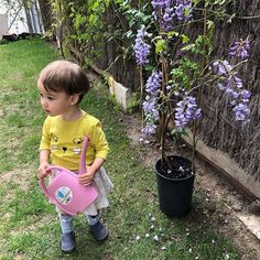 Our toddlers are enjoying spring so much! Heres little Emma watering our new wisteria. #playbasedlearning #englishisfun #aprendenjugandodesde2002 #toddlers #playgroup