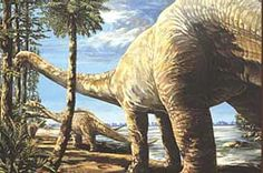Texas designated Brachiosaur sauropod, Pleurocoelus as the official state dinosaur in 1997. But in 2007, paleontologists re-identified the bones and footprints (left in the north and central parts of Texas about 95 to 112 million years ago) as Paluxysaurus Jonesi. The dinosaur is named for the town of Paluxy in Hood County and for the Paluxy River, both of which are near the Jones Ranch site where the fossils of this species were discovered.