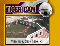 Visit Mike The Tiger on LSU's campus
