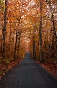 Love this autumn path looks soo amazing and beautiful i really want to live near hear so every morning and afternoons i could just go and take a walk in this beautiful and amazing woods love it my favourite love it. Fall Inspiration, Fotografia Macro, Autumn Scenes, Autumn Cozy, Autumn Fall, Autumn Leaves, Autumn Aesthetic, All Nature, House Nature