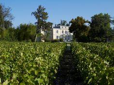 Château Belgrave, Grand Cru Classé Haut-Médoc et Vignoble Dourthe au milieu des vignes - www.dourthe.com