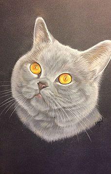 Funny Cat Wallpaper, Cat Sketch, Beginner Painting, Cat 2, Color Pencil Art, Beautiful Cats, Cool Cats, Animal Drawings, Funny Cats