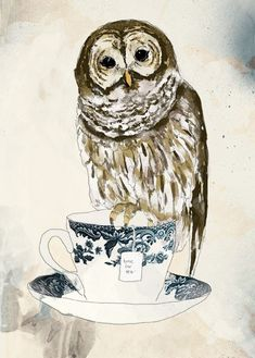 teacup owl- this would be me if i was an animal- a wise owl drinking tea