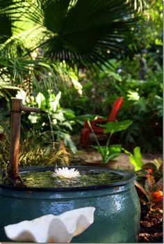 Hawaii, Tropical garden