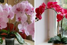 Nápady a Tipy House Plants, Orchids, Home And Garden, Gardening, Classic, Flowers, Lawn And Garden, Derby, Indoor House Plants