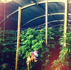 Wiz Khalifa - Weed