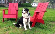 """True for working people and working dogs alike: """"When one door closes, another one opens..."""" http://www.dogster.com/lifestyle/max-turns-his-failure-as-a-farm-dog-into-a-career-on-governors-island"""