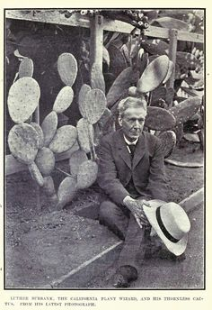 """"""" While I was conducting experiments to make 'spine-less' cactus, I often talked to the plants to create a vibration of love. 'You have nothing to fear,' I would tell them. 'You don't need your defensive thorns.I will protect you.' Gradually the useful plant of the desert emerged in a thorn less variety."""" -Luther Burbank quote"""