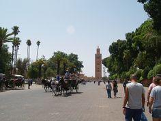 Mosquita