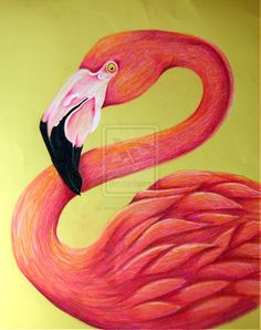 Flamingo by ~depp800 on deviantART