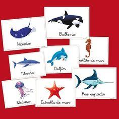 Animales Marinos. Vocabulario infantil