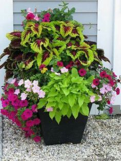 Container Gardening Ideas A crescent garden container filled with coleus, petunias, new guinea impatiens, mandevilla, and potato vine. Flower Pots, Garden Vines, Garden Design, Garden Containers, Container Garden Design, Plants, Planting Flowers, Planter Design, Backyard Landscaping