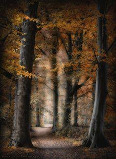 """Landgoed """"De Horsten"""", Wassenaar, Holland 01-10-17 -"""